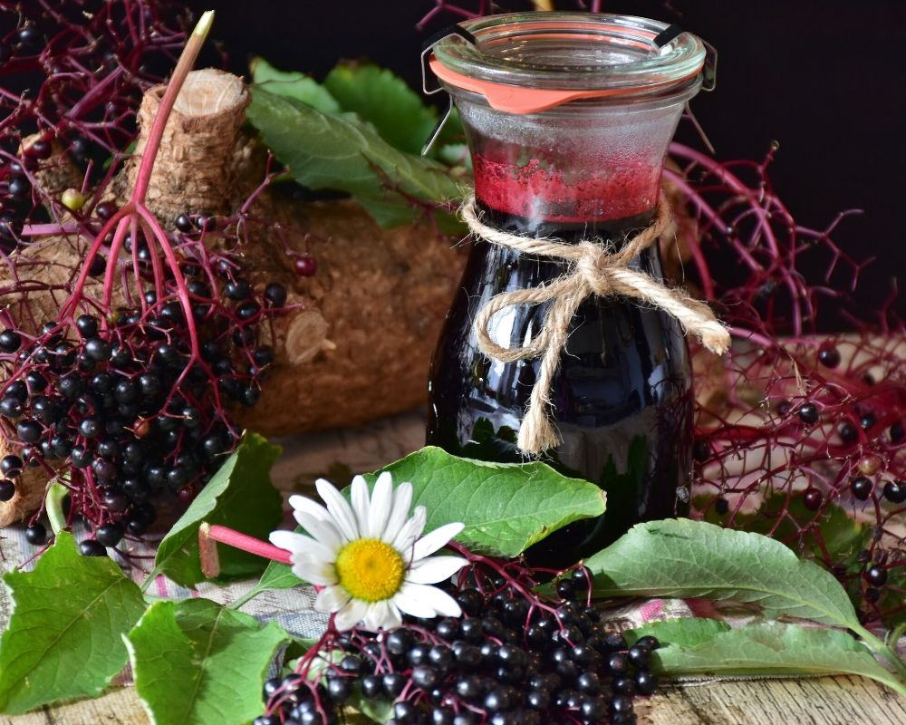 elderberry being used as a herbal remedy